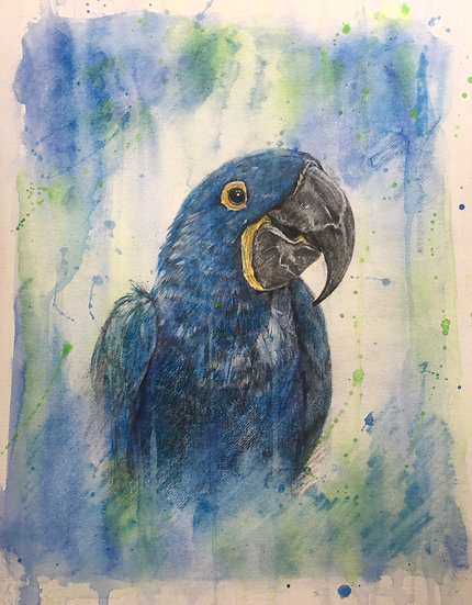 M is for Lear's Macaw