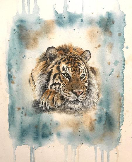 T is for Sunda Tiger