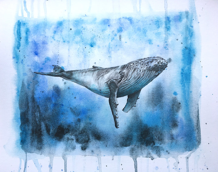 W is for Humpback Whale