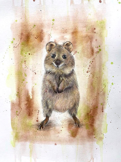 Q is for Quokka