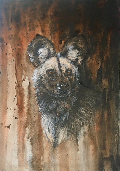 A is for African Wild Dog