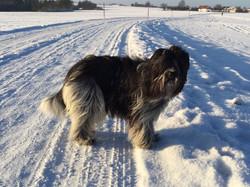 Winterschnee und Winterfell