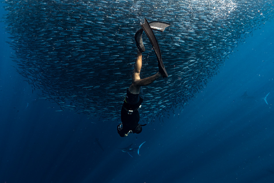 Julia Bahlsen Underwater Photography