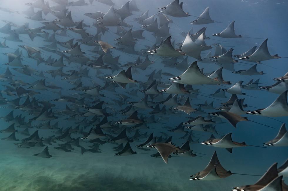 Julia Bahlsen Underwater Photography.jpg