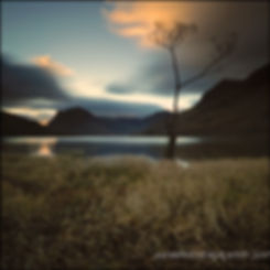 The lonely tree Buttermere