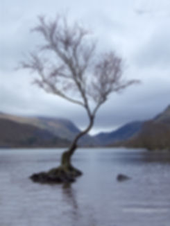 THE LONELY TREE AT LLYN PADARN