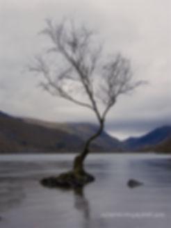THE LONELY TREE LLYN PADARN  SNOWDONIA                                 FINAL 2 images     THE LONELY TREE L         THE LONELY TREE LLYN PADARN