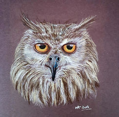 tufted owl brown background (3).jpg