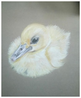 Study of duckling - Pastel 2018