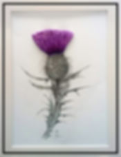 Scottish thistle mixed media