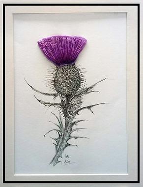 Scottish thistle mixed media