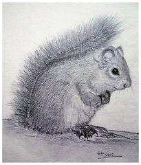 Squirrel - pencil