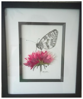 Scabious & Butterfly
