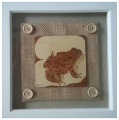 Common Frog Pyrography 2018