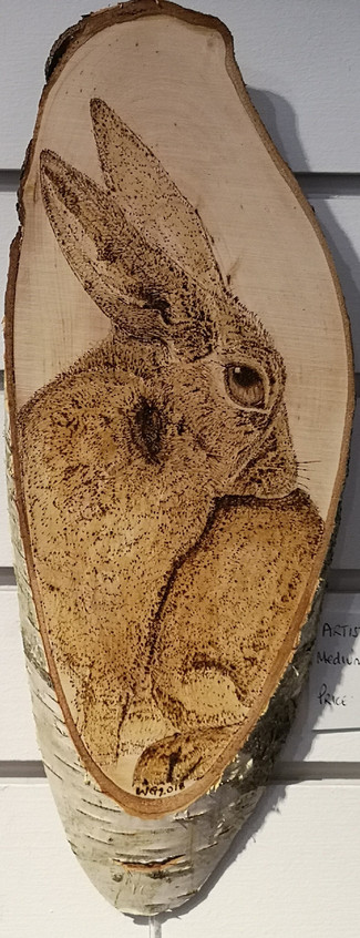 Image spring hare