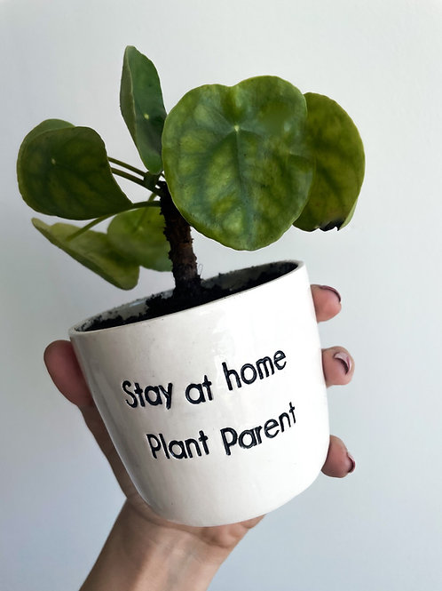 Stay at home plant parent