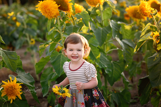 Avon's Sunflower field micro mini sessions