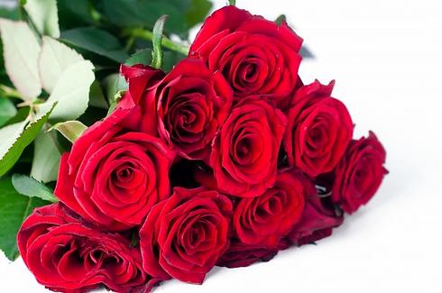 ramo-rosas-sobre-fondo-blanco_70626-3835