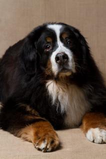 Lucky Dogs Daycare, Peabody, MA