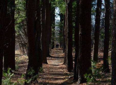 Lone Tree Sanctuary