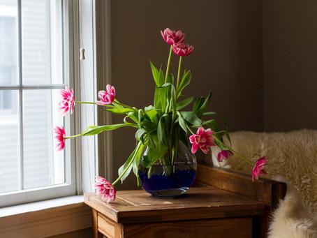 Serene's Tulips