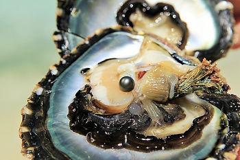 Perla negra, Tahiti, Polinesia Francesa