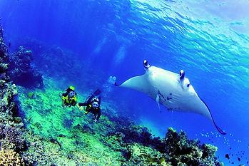 Buceo en Rangiroa, islas Tuamotu, Polinesia