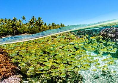 Jardín de coral, Motu Tautau, Tahaa, Polinesia
