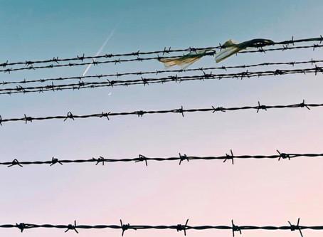 Öykü- Serpil Canalan- Güvercini Sevmek İçin Sansarı Öldürmek
