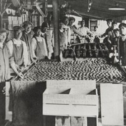 Chinese Workers at Limoneira Ranch in Santa Paula