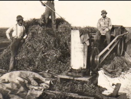 Japanese Field Workers at Waller Seed Company