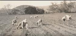 Japanese Field Workers