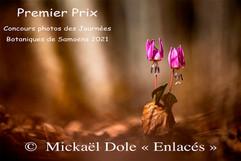 Le Gagnant : Enlacés de Michaël Dole
