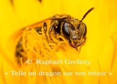 Telle un dragon sur son trésor de Raphaël Grellety