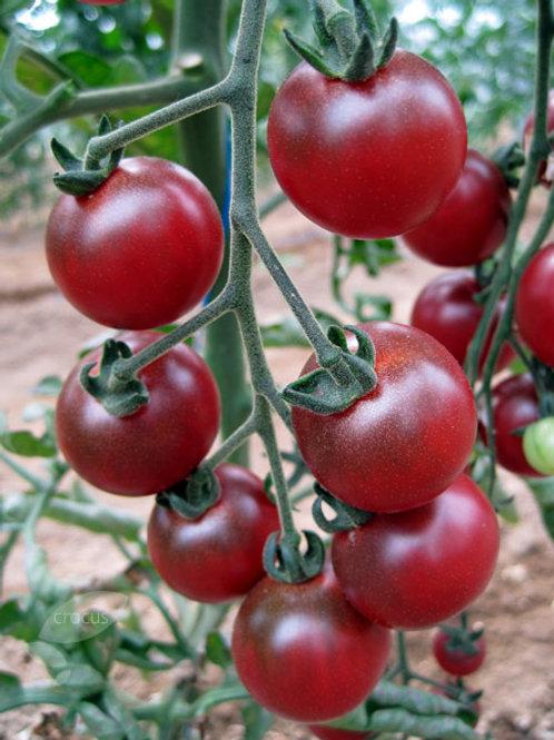 Rosella Purple Tomato