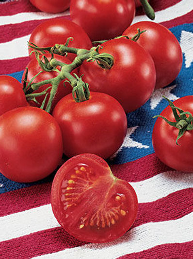 4th of July Tomato