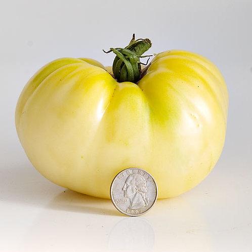 Great White Tomato