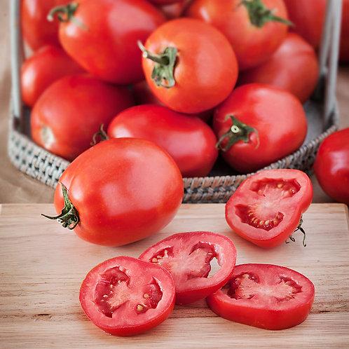 Monica Roma Tomato