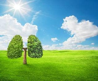Environment_clean_air_web.jpg