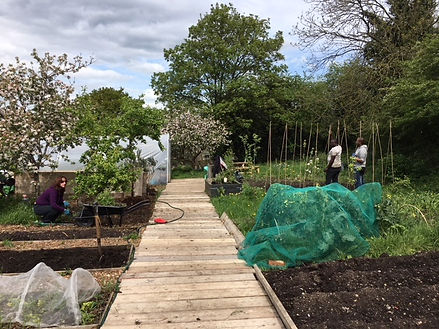 Whetstone Allotment.jpg