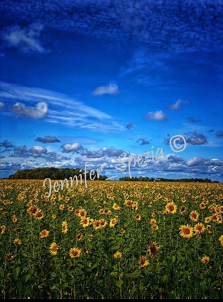 Surprise Field.png