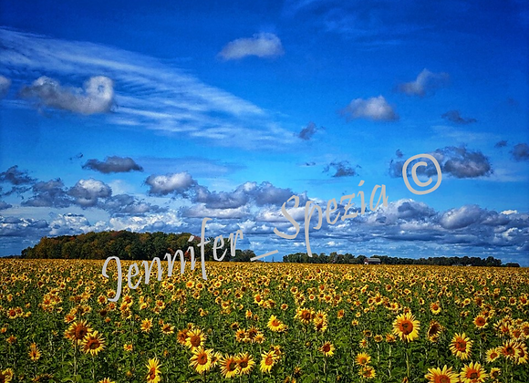 Surprise Field