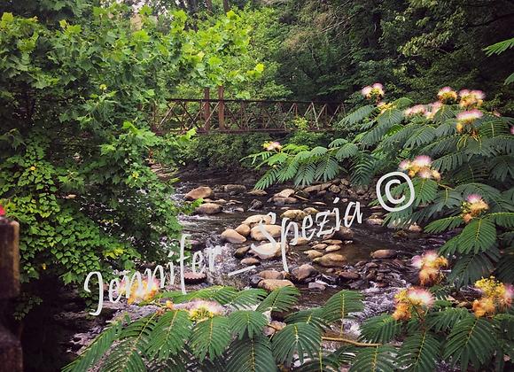 Jungle Waters