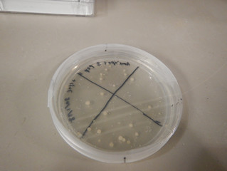 Counting colonies