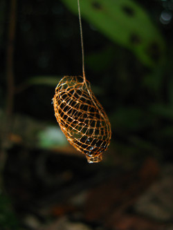 Moth open-network cocoon