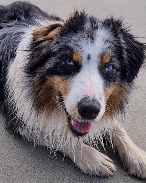 Garde chien Brest 29200 chien dogsitting Dog-sitter Pet-sitter Garde d'animaux  Garde chien Brest  finistère
