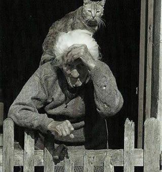 Guide pour retrouver son chat
