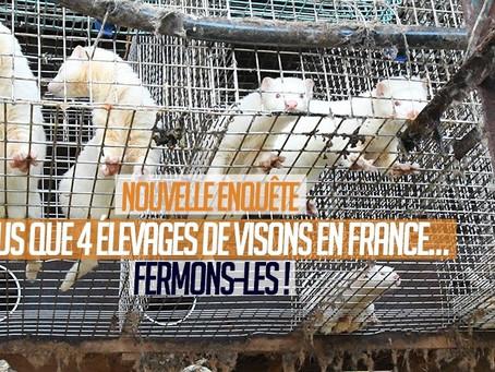 NOUVELLE ENQUÊTE, PLUS QUE 4 ÉLEVAGES DE VISONS EN FRANCE…FERMONS-LES! (lien pétition)
