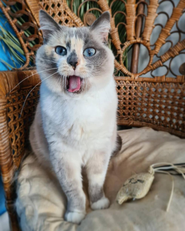 Isy Le chat chineur de Brest
