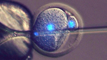 Science : Bientôt l'homme pourra enfanter sans l'aide de la femme